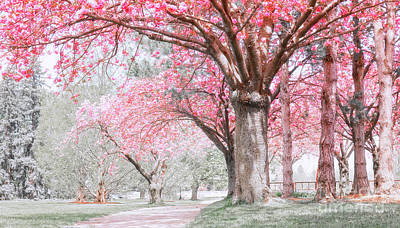 Poster featuring the photograph Cherry Blossom Path by Charline Xia
