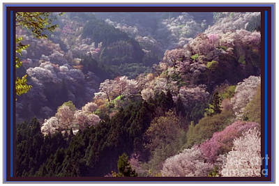 Cherry Blossom Season In Japan Poster