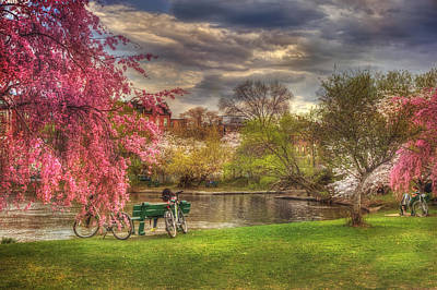 Cherry Blossom Trees On The Charles River Basin In Boston Poster by Joann Vitali