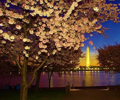 Cherry Blossom Washington Monument Poster