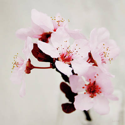 Poster featuring the mixed media Cherry Blossoms 1- Art By Linda Woods by Linda Woods