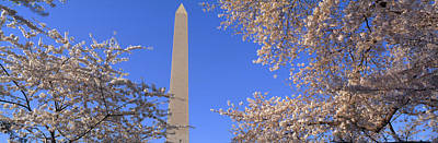Cherry Blossoms And Washington Poster by Panoramic Images