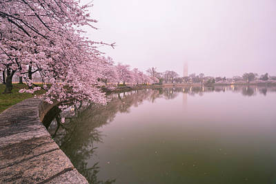 Cherry Blossoms In Fog Poster by Michael Donahue