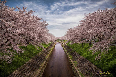 Poster featuring the photograph Cherry Blossoms In Nara by Rikk Flohr