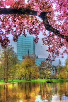 Poster featuring the photograph Cherry Blossoms Over Boston by Joann Vitali
