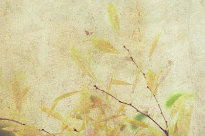 Cherry Branch On Rice Paper Poster