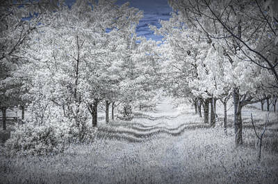 Cherry Orchard Roadway In Infrared Poster by Randall Nyhof