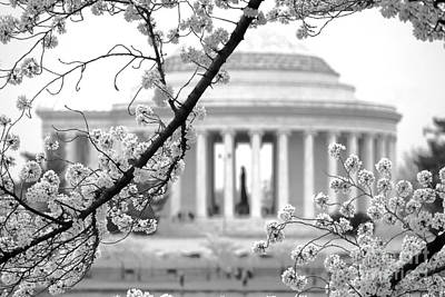 Cherry Tree And Jefferson Memorial Elegance  Poster by Olivier Le Queinec