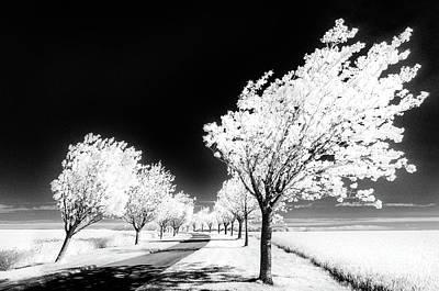 Cherry Tree Grove Wolds Way Huggate Poster by Janet Burdon