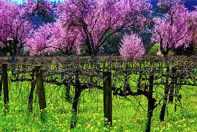 Cherry Trees In Vineyards Poster