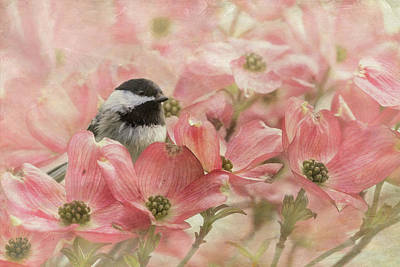 Poster featuring the photograph Chickadee In The Dogwood by Angie Vogel