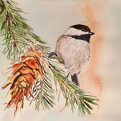 Chickadee In The Pine Poster