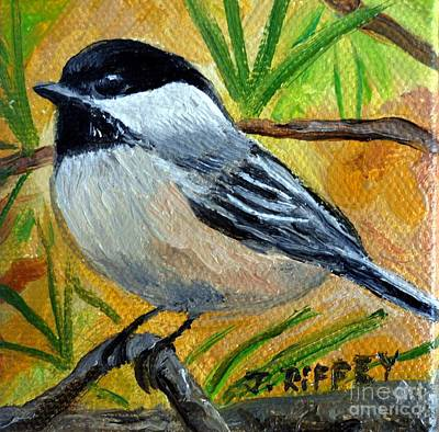 Chickadee In The Pines - Birds Poster