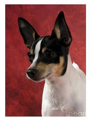 Chihuahua 218 Poster