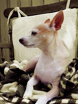 Chihuahua Chiqui Portrait 3 Poster