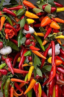 Chili Pepper -  Capsicum Poster by Giuseppe Elio Cammarata