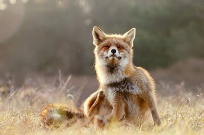 Chill Fox Poster