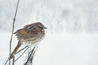 Poster featuring the mixed media Chilly Song Sparrow by Lori Deiter
