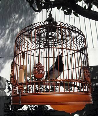 China Bird In Mahogany Cage Poster by Lisa Boyd
