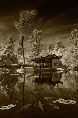 Poster featuring the photograph Chinese Botanical Garden In California With Koi Fish In Sepia Tone by Randall Nyhof