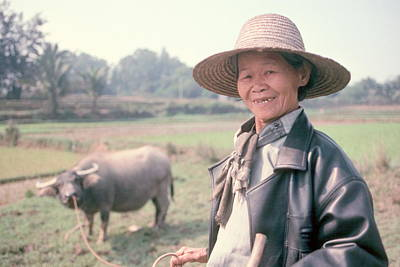 Poster featuring the photograph Chinese Farm Woman Oxen by Douglas Pike