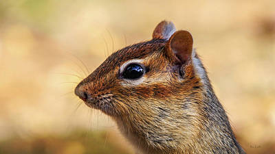 Poster featuring the photograph Chipmunk by Bob Orsillo
