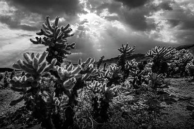 Poster featuring the photograph Cholla Cactus Garden Bathed In Sunlight In Black And White by Randall Nyhof