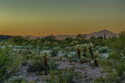 Cholla Desert Sunset Poster