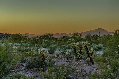 Cholla Desert Sunset Poster