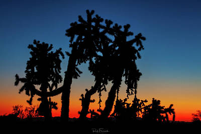 Poster featuring the photograph Cholla Silhouettes by Rick Furmanek