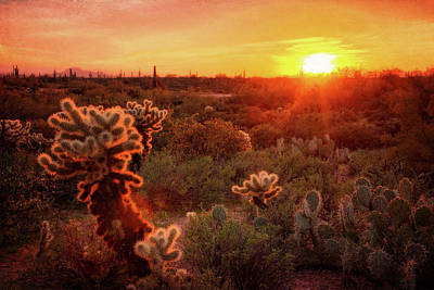 Poster featuring the photograph Cholla Sunset In The Sonoran  by Saija Lehtonen