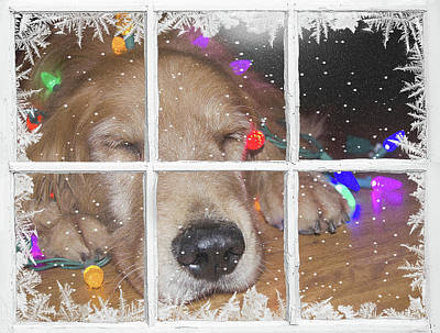 Christmas Golden Retriever Poster by Maria Dryfhout