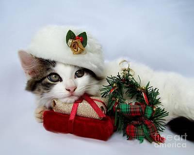 Christmas Kitten Poster by Jai Johnson