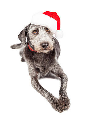 Christmas Santa Terrier Dog Laying Poster
