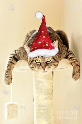 Christmas Splat Cat Poster