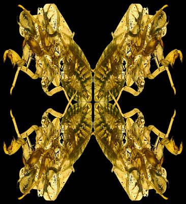 Cicada Shells Poster by Mark Wagoner