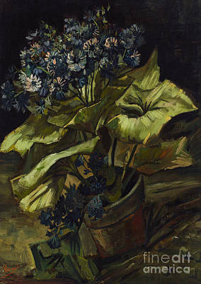Cineraria Poster by Van Gogh