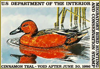 Cinnamon Teal Poster by Lanjee Chee