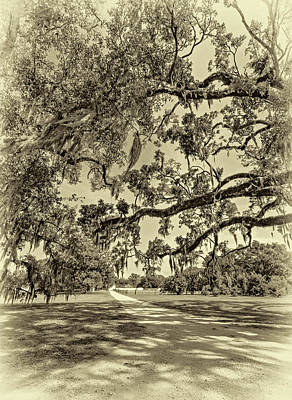 Classic Southern Beauty - Evergreen Plantation -sepia Poster by Steve Harrington