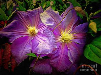 Clematis Azure Pearl Poster by Dorothy Berry-Lound
