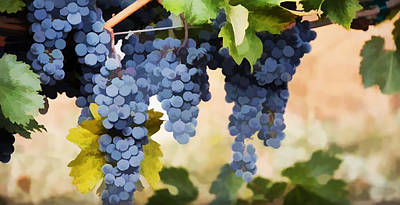Close Up Of  Grapes Hanging On The Vine  Poster
