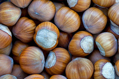 Close-up Of Harvested Hazelnuts Poster by Inga Spence