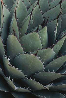 Close View Of An Agave Plant Poster by Michael Melford