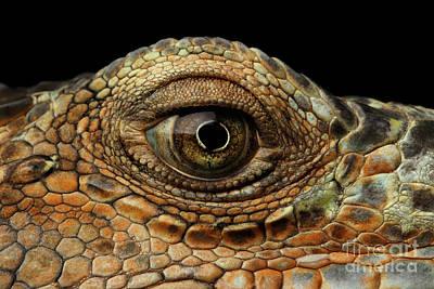 Closeup Eye Of Green Iguana, Looks Like A Dragon Poster by Sergey Taran