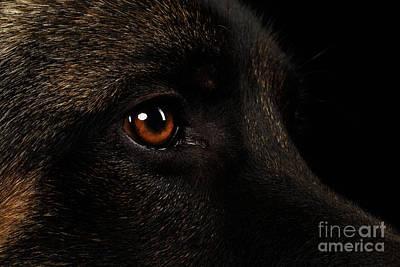 Closeup Eyes Of German Shepherd On Black Poster by Sergey Taran
