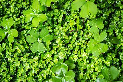 Lush Green Soothing Organic Sense Poster