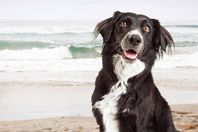 Closeup Of Happy Dog At Beach Poster