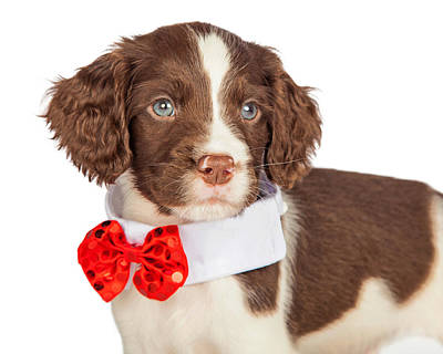 Closup Puppy Wearing Red Christmas Tie Poster by Susan Schmitz