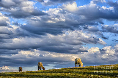 Clouds And Grazing Sheep Poster by Thomas R Fletcher