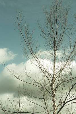 Cloudy Blue Sky Through Tree Top No 2 Poster by Ben and Raisa Gertsberg